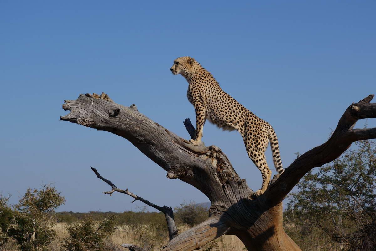 zoo safari veneto